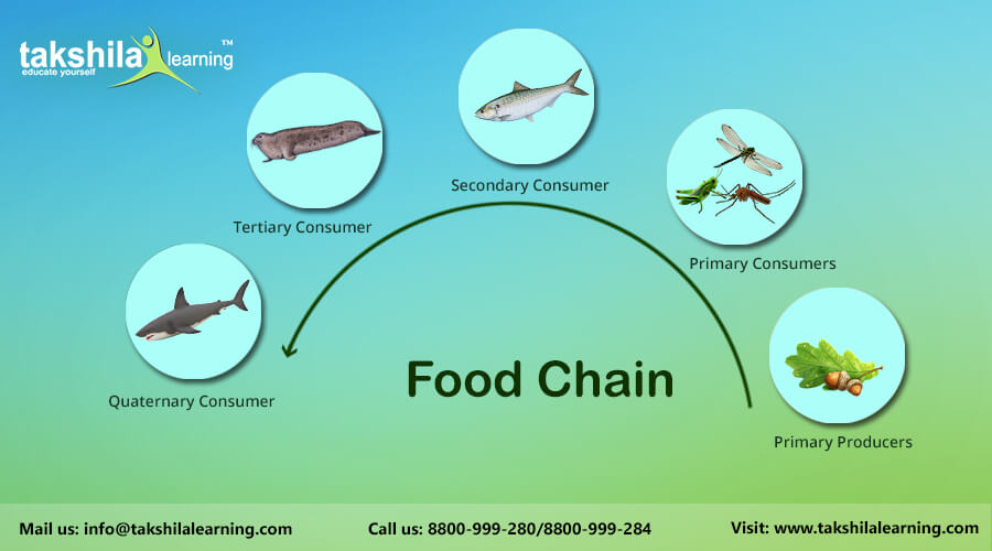 Food Chain Cbse Science Online And Video Classes