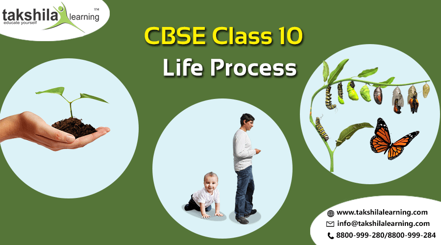 CBSE & NCERT Solutions For Class 10 Life Processes Chapter - 6