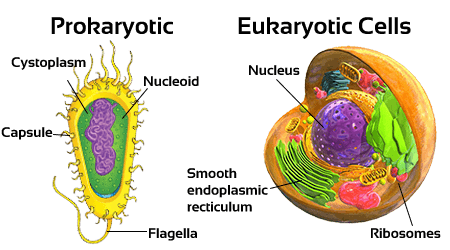 NCERT Solutions for Class 8 Science Cell Structure and ...