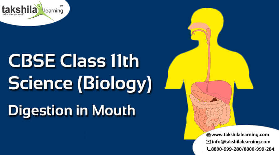bio 202 digestion online exam Free high school biology practice tests with advanced reporting, full solutions, and progress tracking  understanding hormones and digestion practice test.