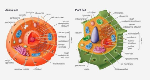 NCERT Class 9 Science - The Fundamental of Life ...