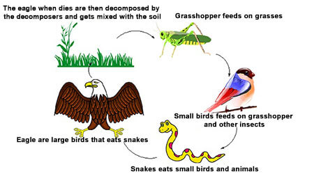 Species and its types Class 8 Science, Conservation of forest and wildlife
