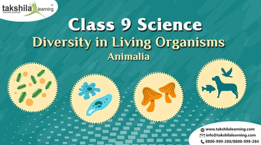 Animalia Class 9 Science Diversity in Living Organisms