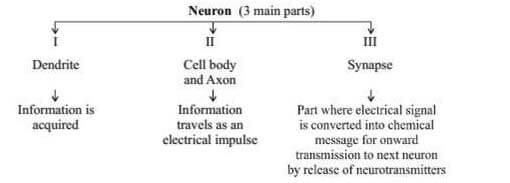 Nervous system class 10 science notes
