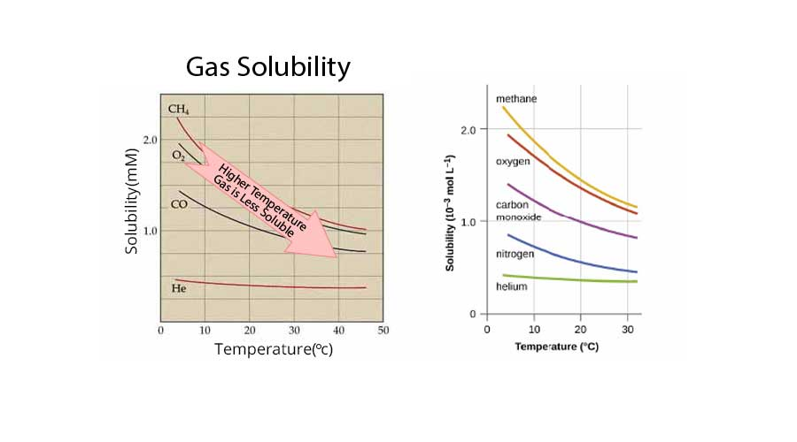 Solubility Of Gases In Liquids Notes for NCERT Chemistry Class 12