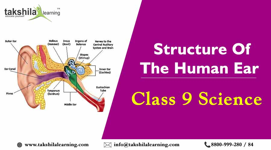 structures of the human ear , Class 9 Science Notes