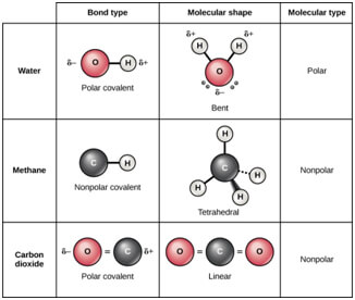 Covalent bonds and its types CBSE Class 11 Chemistry Notes