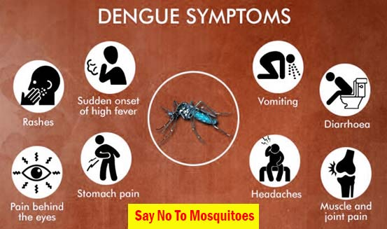 Dengue Fever : Symptoms, Causes, and Treatments