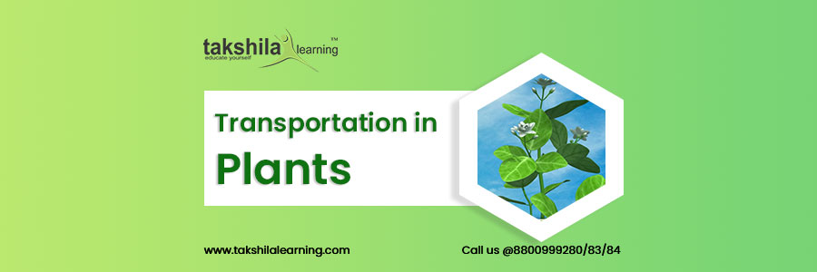 Transportation in Plants , Functions of Xylem and Phloem